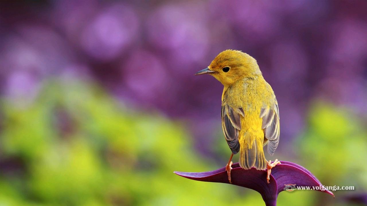 Beautiful Birds Wallpapers (1200x720)