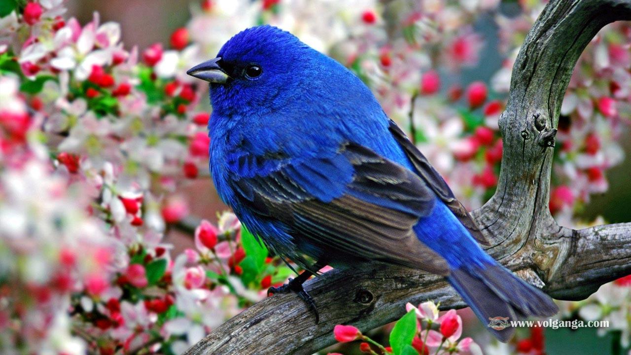Bird Pictures Amazing Birds: Beautiful Birds Wallpapers (1200x720)