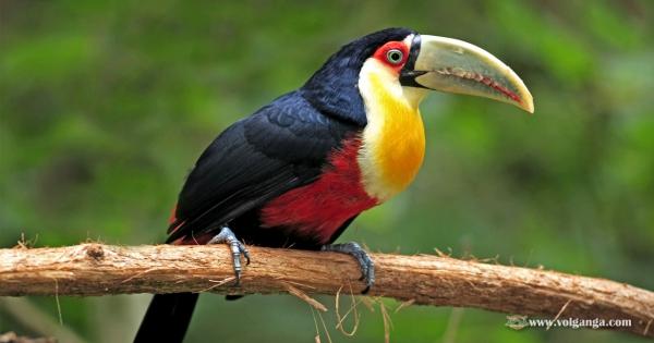 amazing-birds-01