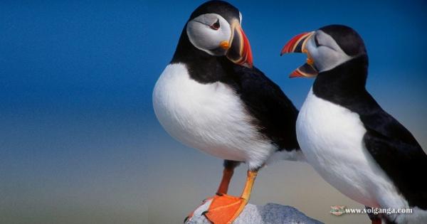 amazing-birds-02