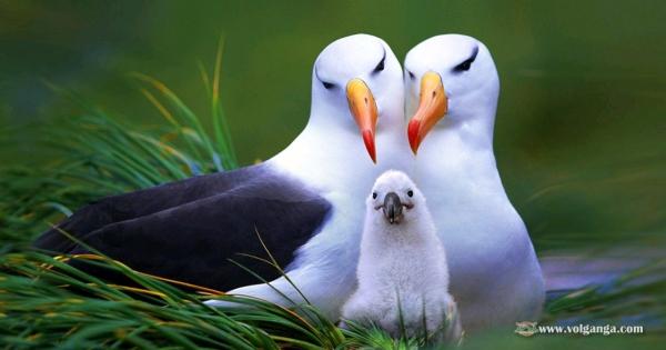 amazing-birds-03