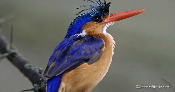 amazing-birds-04