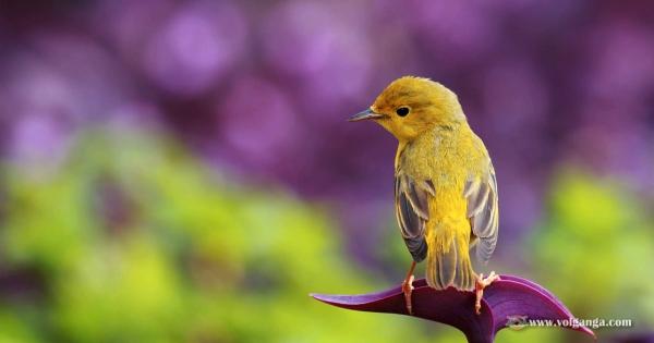 amazing-birds-05