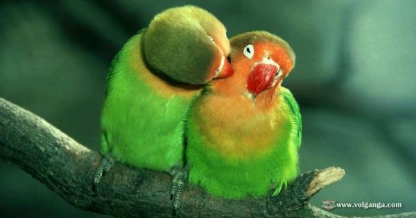 amazing-birds-06