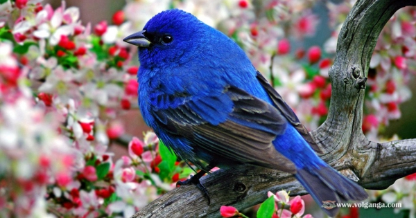 amazing-birds-10