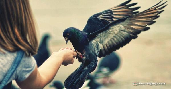 amazing-birds-11