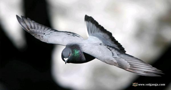 amazing-birds-12