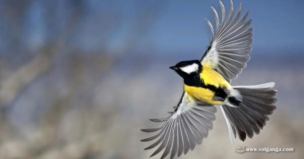 amazing-birds-13