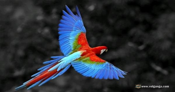 amazing-birds-15