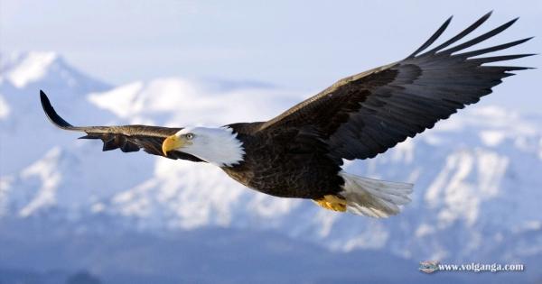 amazing-birds-16
