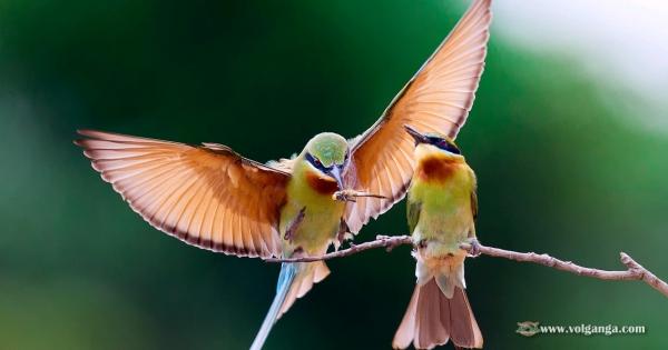 amazing-birds-19