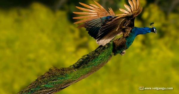 amazing-birds-20