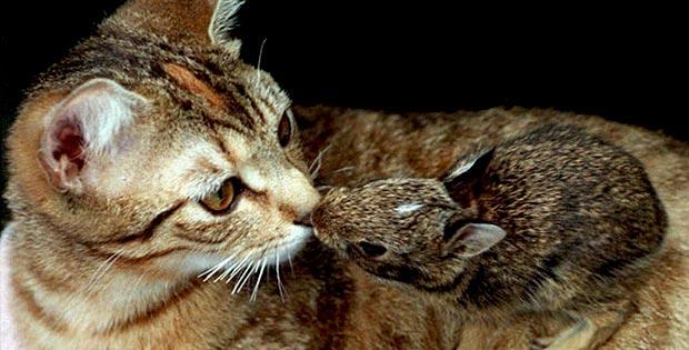 bizarre-animal-friendship_02