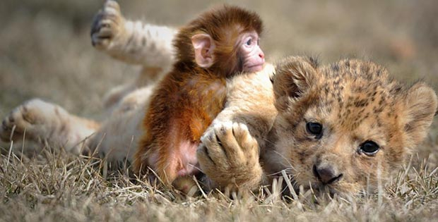 bizarre-animal-friendship_06