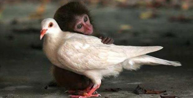 bizarre-animal-friendship_09