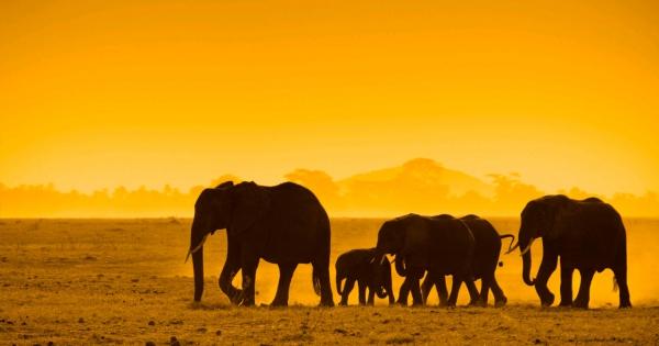 elephants-02