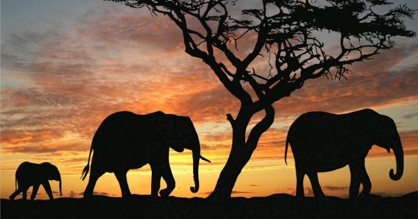 elephants-07