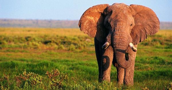 elephants-10