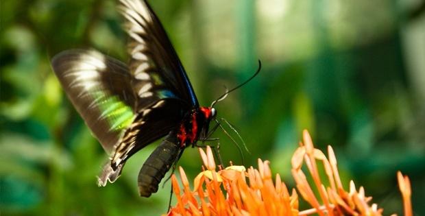 kuala-lumpur-butterfly-park_03