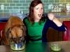 pet-food-taster