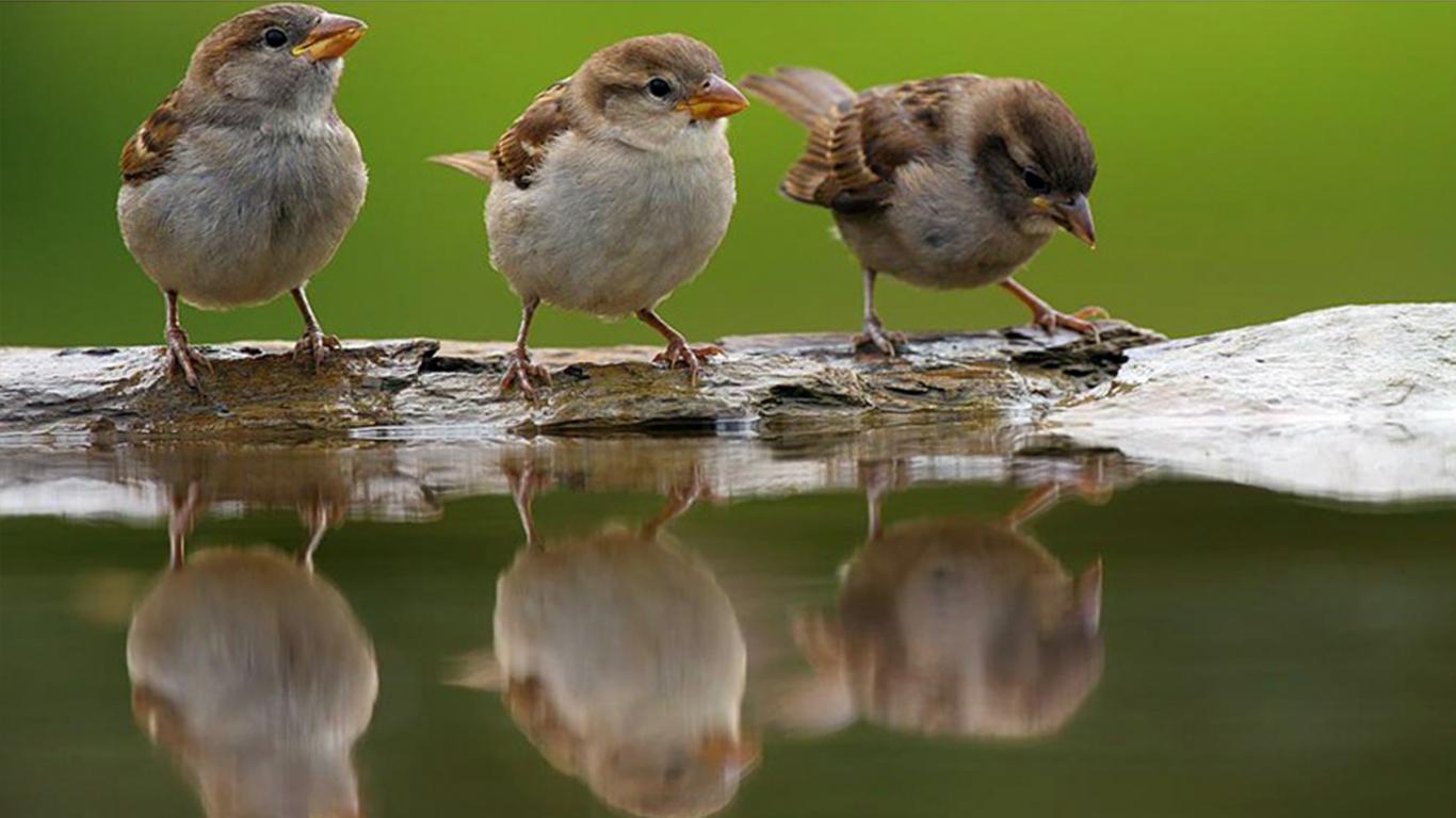 sparrows_hd_09