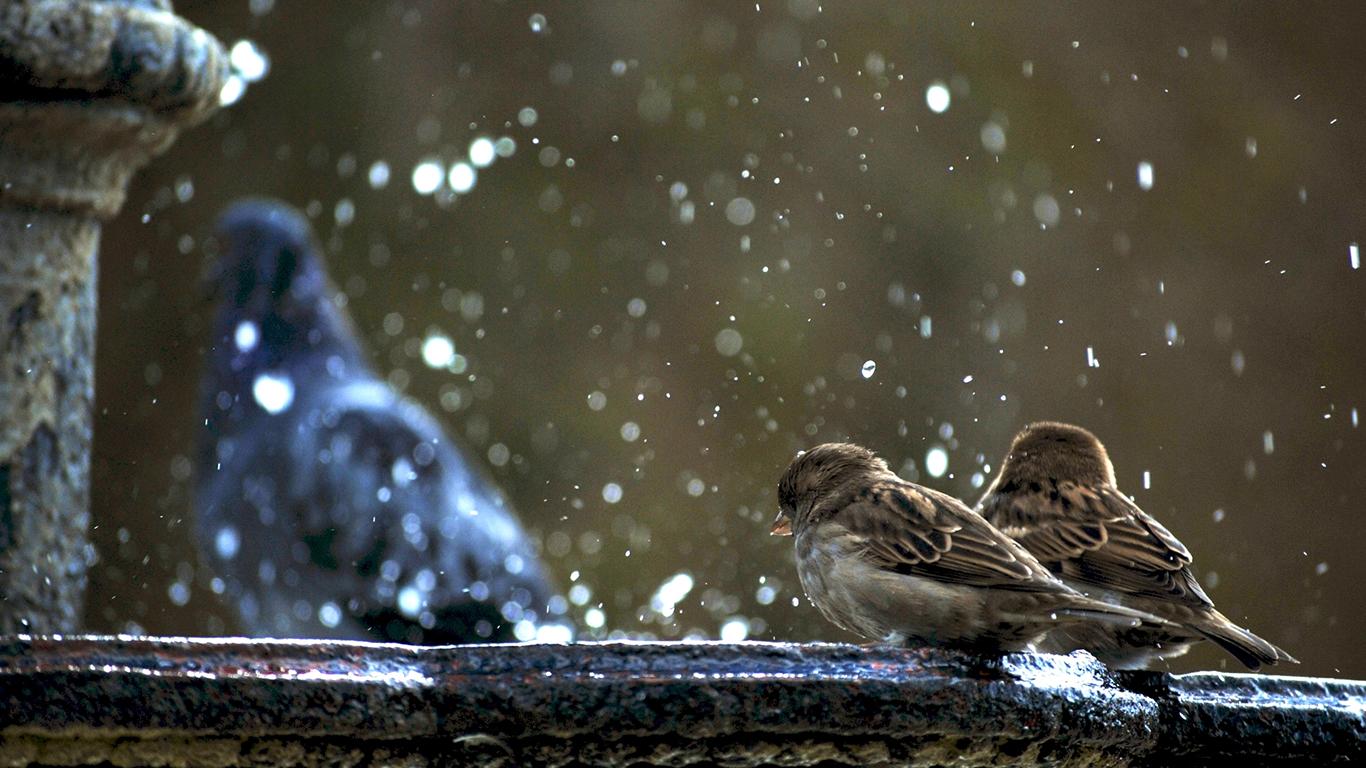 sparrows_hd_10