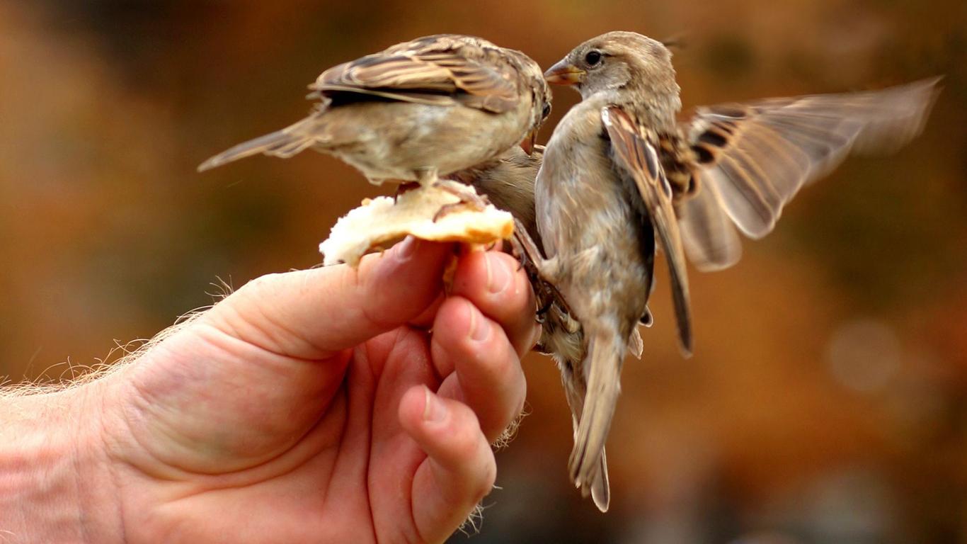 sparrows_hd_19