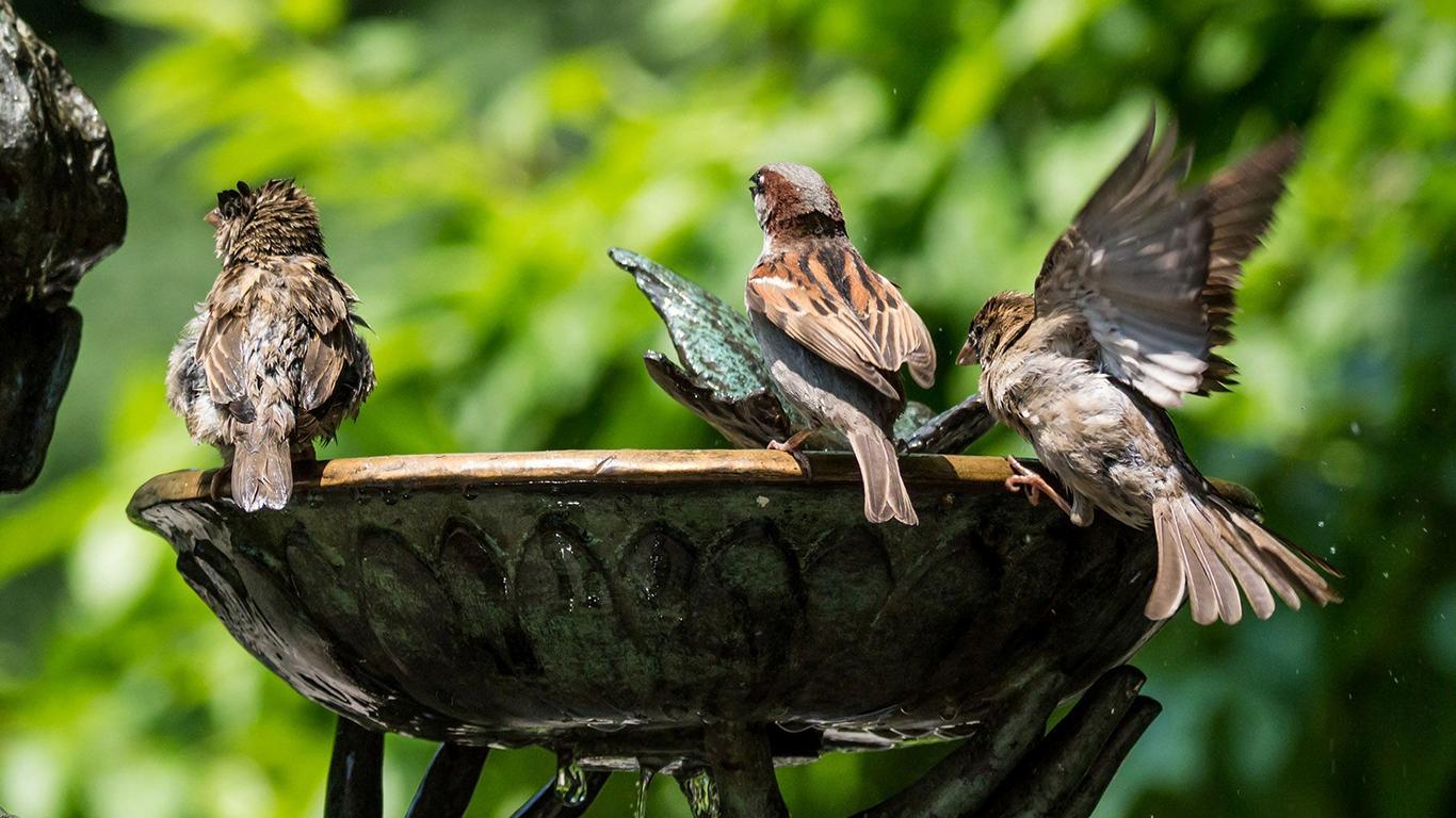 sparrows_hd_22