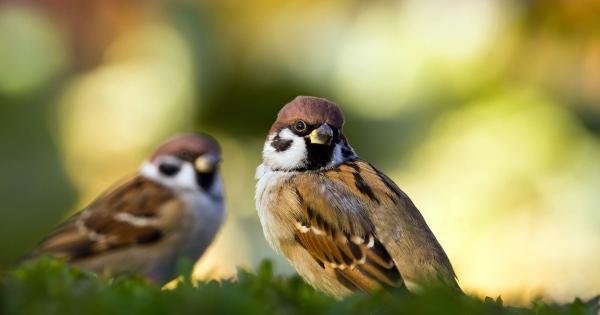 sparrows_hd_01