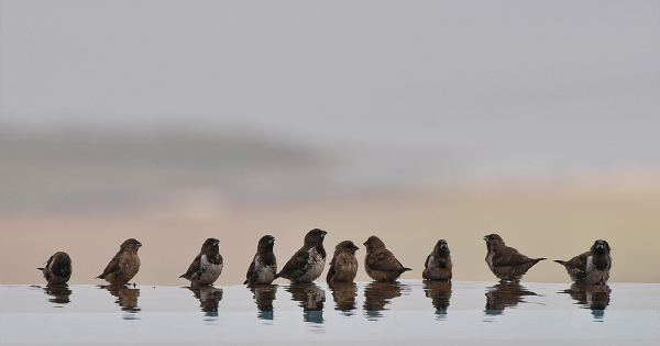 sparrows_hd_05