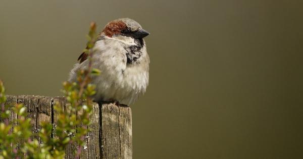 sparrows_hd_07