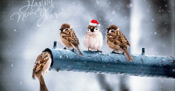 sparrows_hd_11
