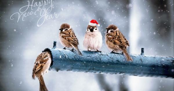 sparrows_hd_11