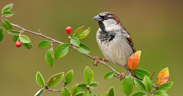 sparrows_hd_15