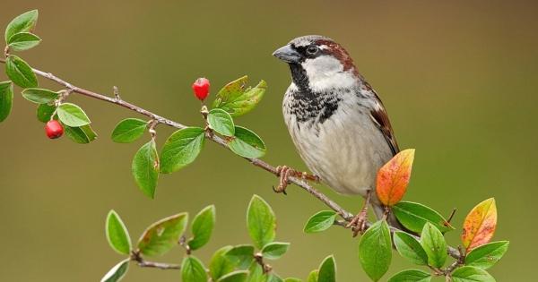 sparrows_hd_15