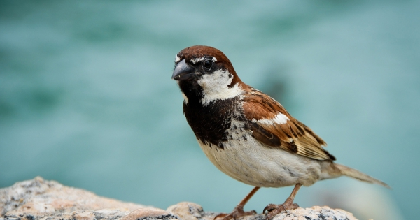 sparrows_hd_16