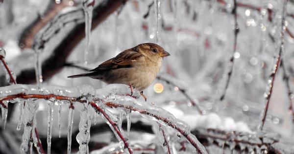 sparrows_hd_17