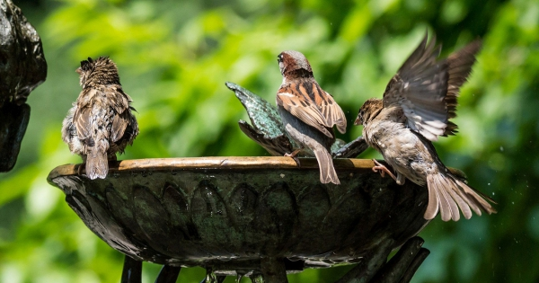 sparrows_hd_22
