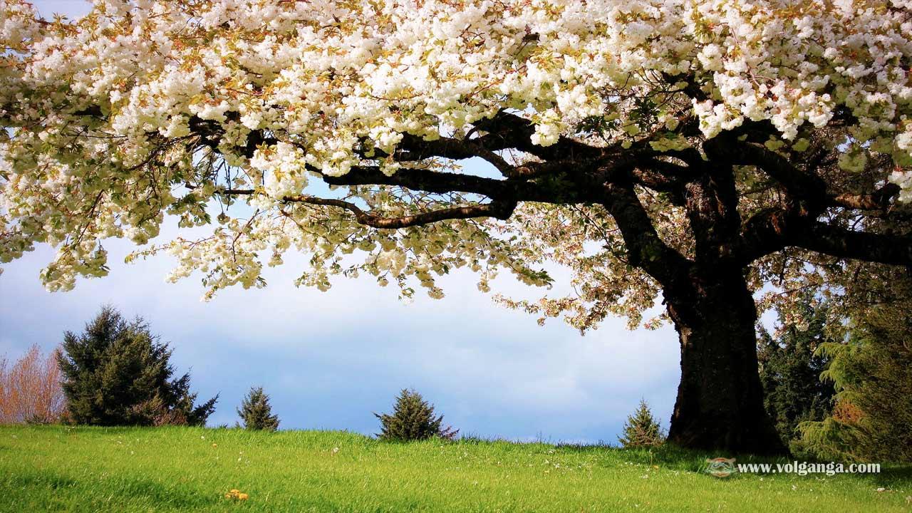 beautiful-trees-02