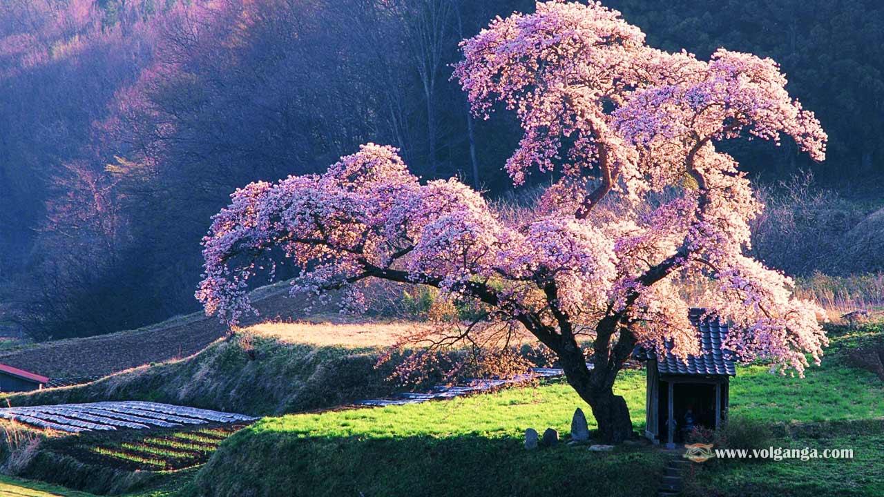 beautiful-trees-03