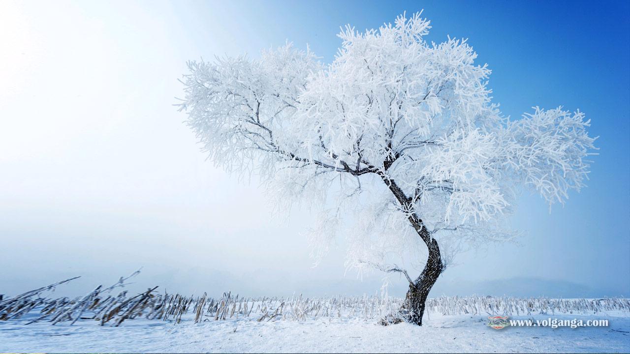 beautiful-trees-04