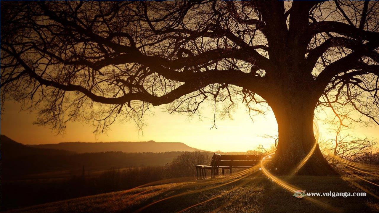 beautiful-trees-10