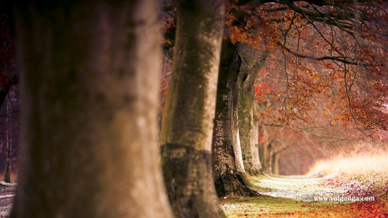 beautiful-trees-13