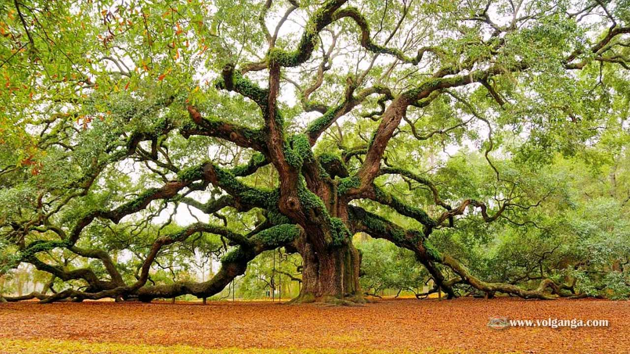 beautiful-trees-15