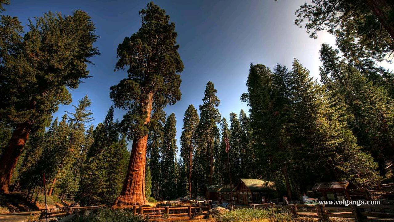 beautiful-trees-17