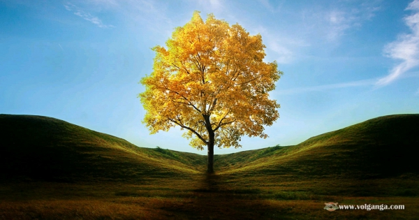 beautiful-trees-05