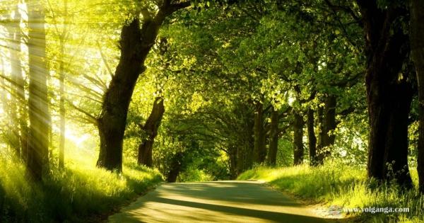 beautiful-trees-06