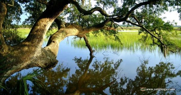 beautiful-trees-07