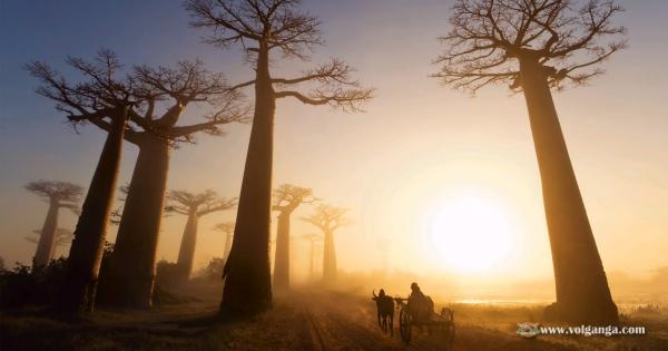 beautiful-trees-16