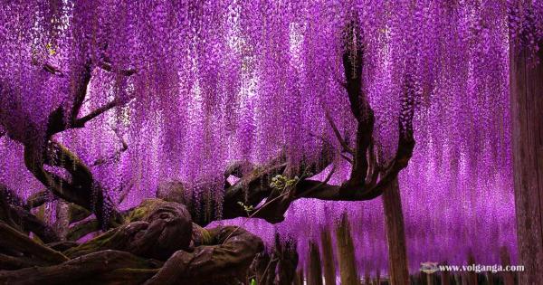 beautiful-trees-18
